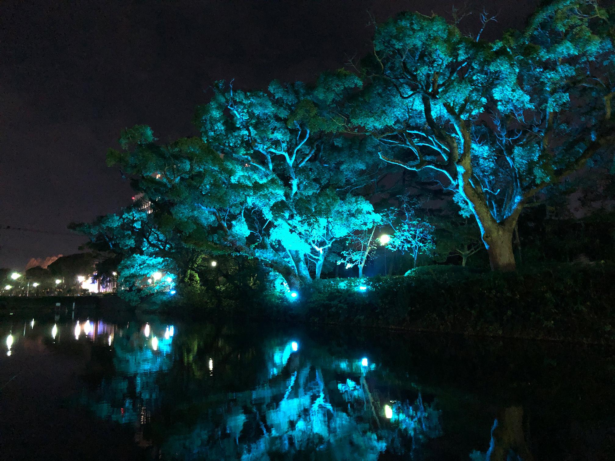 佐賀城公園北側お濠ライトアップ