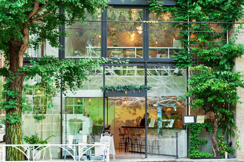 代々木公園そばの立地から「木に人々が集う」イメージをした店内・外観装飾
