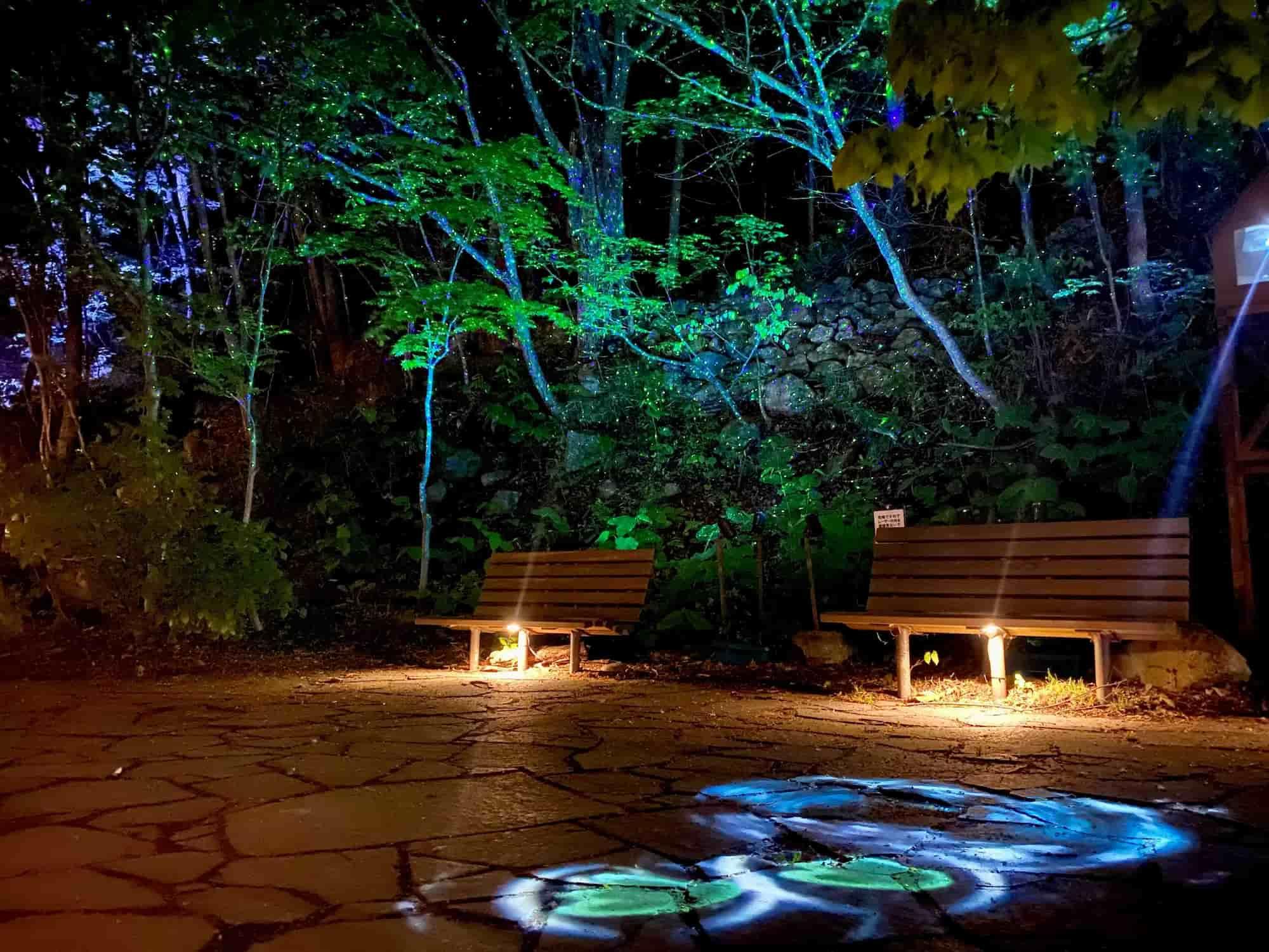 Forest Illumination